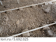 Купить «Подготовленный к заливке цементом пол», фото № 5692025, снято 3 июля 2013 г. (c) Losevsky Pavel / Фотобанк Лори