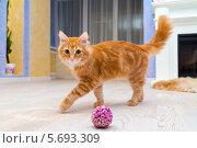 Купить «Кот играет с мячиком», фото № 5693309, снято 22 декабря 2013 г. (c) Андрей Воробьев / Фотобанк Лори