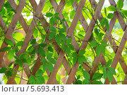 Купить «Деревянный забор с переплетением ветвей и листьев», фото № 5693413, снято 30 июня 2013 г. (c) Losevsky Pavel / Фотобанк Лори