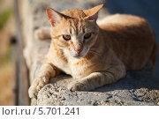 Рыжий кот на каменном парапете. Стоковое фото, фотограф Олег Прокофьев / Фотобанк Лори