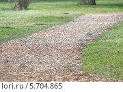 Купить «Дорожка в парке», фото № 5704865, снято 7 марта 2014 г. (c) Евгений Чернышов / Фотобанк Лори