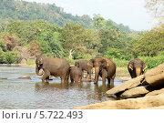 Купание слонов в Пиннавела. Шри-Ланка (2014 год). Стоковое фото, фотограф Сергей Воронин / Фотобанк Лори