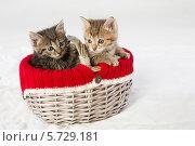 Купить «Плетеная корзинка с двумя маленькими котятами», фото № 5729181, снято 14 апреля 2013 г. (c) Losevsky Pavel / Фотобанк Лори