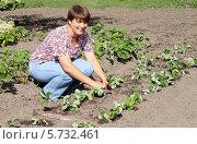Купить «Женщина сажает клубнику», фото № 5732461, снято 25 августа 2013 г. (c) EgleKa / Фотобанк Лори