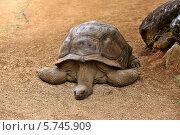 Купить «Большая черепаха», фото № 5745909, снято 30 января 2012 г. (c) Морозова Татьяна / Фотобанк Лори