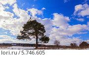 Купить «Дерево в поле, таймлапс», видеоролик № 5746605, снято 27 марта 2014 г. (c) Никита Майков / Фотобанк Лори