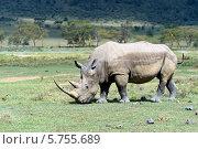 Купить «Носорог в национальном парке Кении», фото № 5755689, снято 1 января 2012 г. (c) Эдуард Кислинский / Фотобанк Лори