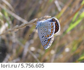 Бабочка на травинке. Стоковое фото, фотограф Константин Левада / Фотобанк Лори