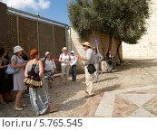 Купить «Израиль. Экскурсионная группа в Иерусалиме на горе Сион», эксклюзивное фото № 5765545, снято 9 октября 2012 г. (c) Ирина Борсученко / Фотобанк Лори