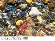 Купить «Каменистое дно ручья с искрящейся водой», эксклюзивное фото № 5782789, снято 6 апреля 2014 г. (c) Евгений Мухортов / Фотобанк Лори