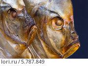 Купить «Две головы рыбы вомер крупным планом», фото № 5787849, снято 6 апреля 2014 г. (c) V.Ivantsov / Фотобанк Лори