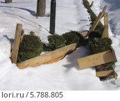 Живая изгородь, огороженная досками на зиму. Южно-Сахалинск. Стоковое фото, фотограф Елена Киселева / Фотобанк Лори
