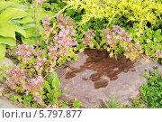 Купить «Ландшафтный дизайн на даче», эксклюзивное фото № 5797877, снято 6 июля 2013 г. (c) stargal / Фотобанк Лори