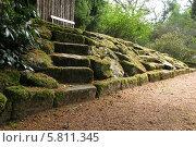 Ступени и камни заросшие мхом. Стоковое фото, фотограф Хельга Танг / Фотобанк Лори