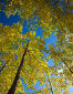 Кроны осенних деревьев н фоне голубого неба, фото № 5813369, снято 22 сентября 2013 г. (c) Tamara Kulikova / Фотобанк Лори