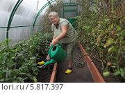 Купить «Пожилая женщина поливает огород в теплице», фото № 5817397, снято 4 августа 2013 г. (c) Игорь Долгов / Фотобанк Лори