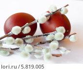 Крашенные пасхальные яйца с веточками вербы на белом фоне. Стоковое фото, фотограф E. O. / Фотобанк Лори