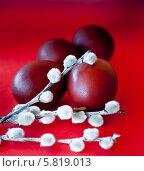 Крашенные пасхальные яйца и верба на красном фоне. Стоковое фото, фотограф E. O. / Фотобанк Лори