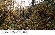 Купить «Осенний лес», видеоролик № 5823161, снято 5 января 2012 г. (c) Виталий Зверев / Фотобанк Лори