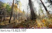 Купить «Осенний лес», видеоролик № 5823197, снято 5 января 2012 г. (c) Виталий Зверев / Фотобанк Лори