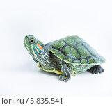 Купить «Красноухая болотная черепаха», фото № 5835541, снято 14 апреля 2014 г. (c) Типляшина Евгения / Фотобанк Лори
