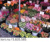 Цветочный рынок. Стоковое фото, фотограф Татьяна Чечина / Фотобанк Лори