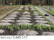 Калининградский ботанический сад в апреле. Стоковое фото, фотограф Наташа Антонова / Фотобанк Лори