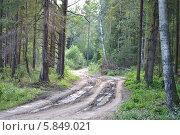 Лесная дорога. Стоковое фото, фотограф Юрий Зотов / Фотобанк Лори