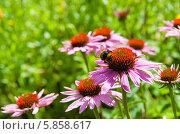 Купить «Летний, солнечный пейзаж с цветком эхинацеи на переднем плане», фото № 5858617, снято 3 августа 2013 г. (c) Татьяна Кахилл / Фотобанк Лори