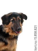 Дворовая собака. Стоковое фото, фотограф Ирина Еськина / Фотобанк Лори