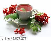 Чай с рябиной. Стоковое фото, фотограф Анастасия Кунденкова / Фотобанк Лори