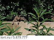 Кот в парке в Барселоне. Стоковое фото, фотограф Юлия Романова / Фотобанк Лори