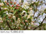 Первый нектар. Стоковое фото, фотограф Максим Цапко / Фотобанк Лори