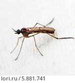 Купить «Комар сидит на светлом фоне», эксклюзивное фото № 5881741, снято 7 мая 2014 г. (c) Игорь Низов / Фотобанк Лори