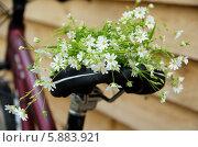 Букет весенних цветов на велосипедном сиденье. Стоковое фото, фотограф Наталия Тихонова / Фотобанк Лори