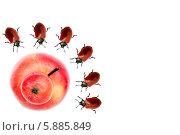 Купить «Двойное красное сросшееся яблоко в окружении жуков на белом фоне. Место для текста», фото № 5885849, снято 31 января 2014 г. (c) Евгений Ткачёв / Фотобанк Лори