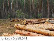 Дерево, бревно, сосна, сруб, дрова,лес, Стоковое фото, фотограф Амелия Дадабаева / Фотобанк Лори