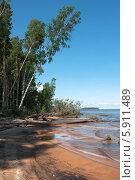 Деревья на берегу водохранилища. Стоковое фото, фотограф Павел Паладьев / Фотобанк Лори