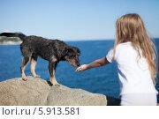 Девочка протягивает руку бездомной собаке у моря. Стоковое фото, фотограф Viktor Gladkov / Фотобанк Лори
