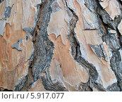Купить «Кора сосны пинии, фон», фото № 5917077, снято 7 сентября 2011 г. (c) Ирина Борсученко / Фотобанк Лори