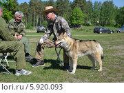 Выставка охотничьих собак 2014г. Редакционное фото, фотограф Геннадий Балаев / Фотобанк Лори