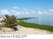 Купить «Красивый природный пейзаж, сосна на склоне дюны. Куршская коса», эксклюзивное фото № 5922377, снято 18 мая 2014 г. (c) Svet / Фотобанк Лори
