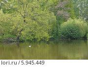 Купить «Летний пейзаж на берегу водоёма», эксклюзивное фото № 5945449, снято 17 февраля 2020 г. (c) Svet / Фотобанк Лори