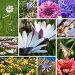Коллаж: весенние цветы, фото № 5948085, снято 25 июня 2017 г. (c) SummeRain / Фотобанк Лори