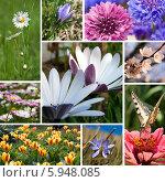 Купить «Коллаж: весенние цветы», фото № 5948085, снято 19 октября 2018 г. (c) SummeRain / Фотобанк Лори