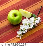 Купить «Зеленое яблоко с ветвью цветущей яблони», фото № 5950229, снято 25 мая 2014 г. (c) Игорь Соколов / Фотобанк Лори