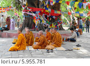 Буддийские монахи под деревом бодхи. Лумбини. Непал. (2011 год). Редакционное фото, фотограф Евгения Цветкова / Фотобанк Лори
