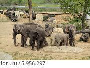 Купить «Слоны в пражском зоопарке», фото № 5956297, снято 12 апреля 2014 г. (c) Хименков Николай / Фотобанк Лори