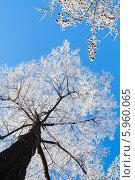 Купить «Деревья покрытые инеем», фото № 5960065, снято 9 января 2008 г. (c) Павел Родимов / Фотобанк Лори