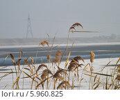 Сухая трава на фоне реки и зимнего пейзажа. Стоковое фото, фотограф Александр Коноваленко / Фотобанк Лори
